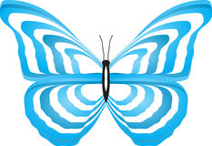 Butterfly. There is butterfly on white background Royalty Free Stock Photos