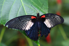 Free Butterfly Stock Photos - 6993063