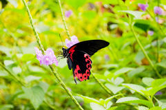 Butterfly. Colorful butterfly on a plant Royalty Free Stock Images