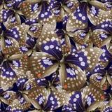 Butterfly04 Fotos de archivo