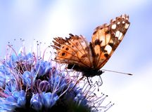 Butterfly. In a flower Royalty Free Stock Images