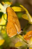 Butterfly. Macro shot of a wonderful orange butterfly royalty free stock image