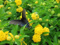 Butterfly. Nature Royalty Free Stock Photo