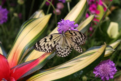 Butterfly. In garden Stock Photos