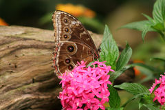 Butterfly. Springtime in the garden Stock Photos