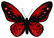 Butterfly Stock Images