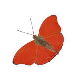 Butterfly. Red Glider royalty free stock photography