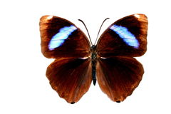 Butterfly. Colored Butterfly Stock Photography
