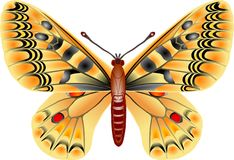 Butterfly. On white stock illustration