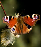 Butterfly. At early spring time on flower Stock Photo