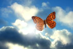 Butterfly. A beautiful butterfly flying in a cloudy sky stock images