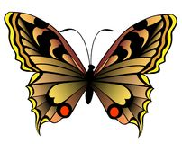 Butterfly. The beautiful butterfly against white colours Royalty Free Illustration
