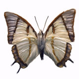 Butterfly. Digital painting of a butterfly Royalty Free Stock Image