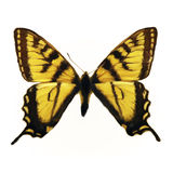 Butterfly. Digital painting of a butterfly Royalty Free Stock Images