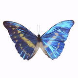 Butterfly. Digital painting of a butterfly Stock Photo