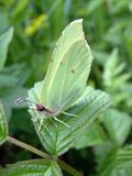 Butterfly. Seating on leaf royalty free stock photo
