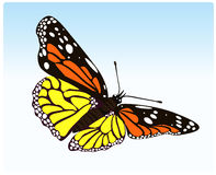 Butterfly. Vector illustration of color butterfly on blue background vector illustration