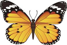 Butterfly. Vector Illustration of butterfly on the white Stock Images