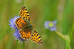 Butterfly. Spring scene with butterfly on a flower royalty free stock images