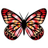 Butterfly 9. Ornamental butterfly in light red colours Stock Image