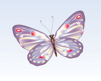 Butterfly 9 Royalty Free Stock Photos