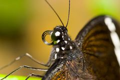 Butterfly. Closeup of a Butterfly Royalty Free Stock Photos
