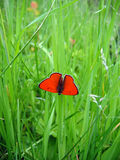 Butterfly. The butterfly on a grass Stock Images
