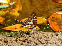 Butterfly2 Immagine Stock Libera da Diritti
