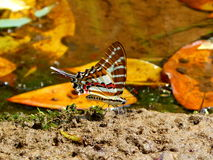 Butterfly2 Royaltyfri Bild