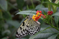 Butterfly. On flower in  house royalty free stock photos