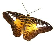 Butterfly. Isolated colorful butterfly Stock Photo