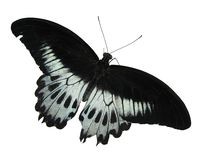 Butterfly. Isolated butterfly Royalty Free Stock Photography
