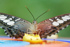 Butterfly. Close-up Royalty Free Stock Photography