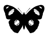 Butterfly. Black silhouette of an exotic butterfly Royalty Free Stock Image