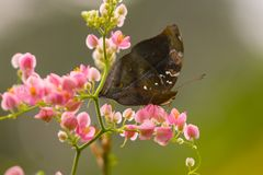 Free Butterfly Stock Photography - 9765582