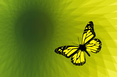 Butterfly on abstract background Stock Image