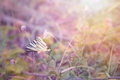 Butterfly Admiral in a fairy light drinking nectar on a flower royalty free stock photos