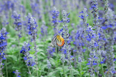 Butterfly adn Flower Royalty Free Stock Photos