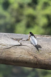 Butterfly against Blur Background at Iguazu Park Stock Photo