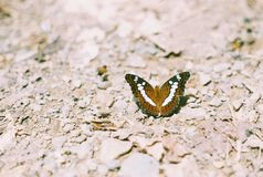 Butterfly against a stone background. Royalty Free Stock Images