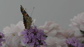 Butterfly airobics stock footage