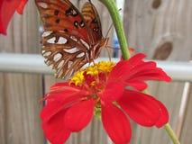 Butterfly1 alaranjado foto de stock