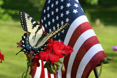 Butterfly and American flag. Beautiful butterfly on a red flower with American flag in the background royalty free stock images