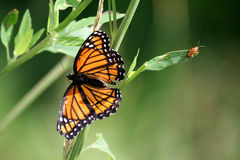 Butterfly And Bug Royalty Free Stock Photography