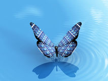 Butterfly And Ecology Stock Image