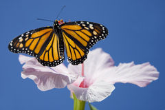 Free Butterfly And Flower Stock Photography - 11210062