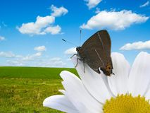 Free Butterfly And Flower Stock Image - 1510721