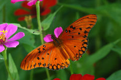 Free Butterfly And Flowers Royalty Free Stock Photo - 409295