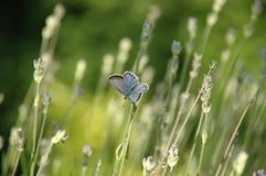 Free Butterfly And Flowers Stock Images - 4316314