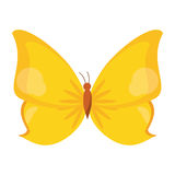 Butterfly animal insect fly Stock Photo